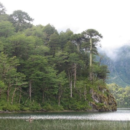 Naturpark Pucón