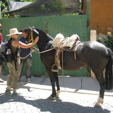 Pferde Chile