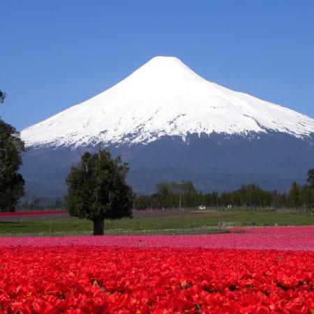 Vulkan Osorno Chile