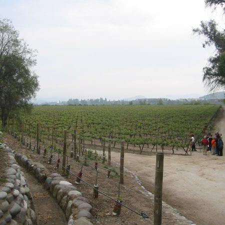 Weingut Chile