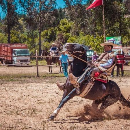 Gaucho mit Pferd
