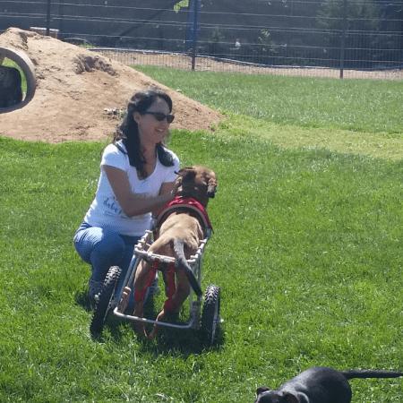 Freiwilligenarbeit Hundeheim
