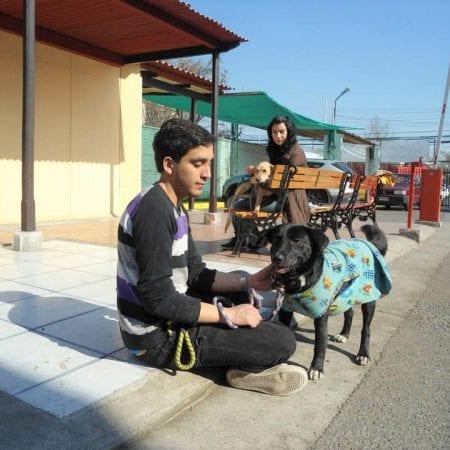 Freiwilligenarbeit Tierheim